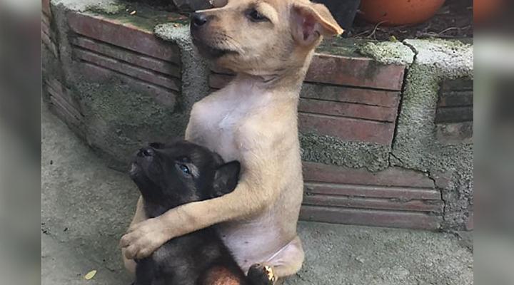 Эта фотография напуганных бездомных щенков взорвала интернет