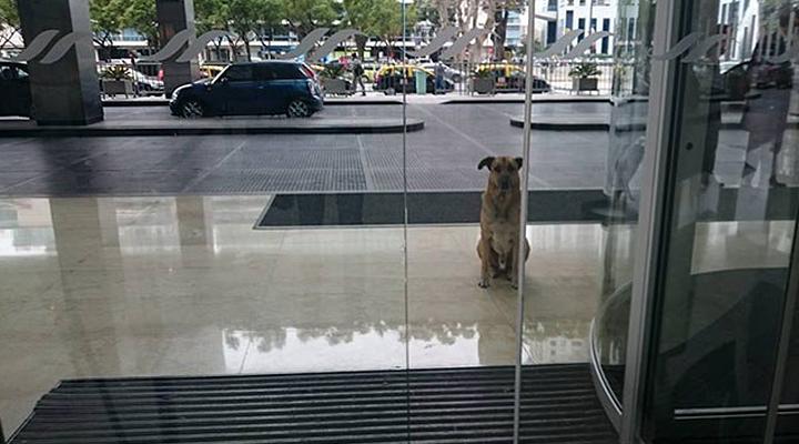 Он не переставал с надеждой ждать у дверей отеля и получил лучшую награду за свою преданность