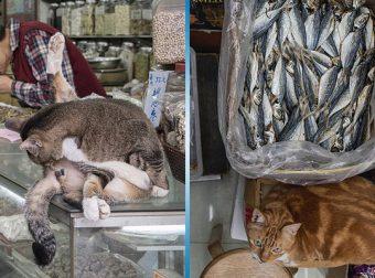 Тайная жизнь котов в магазинах Гонконга