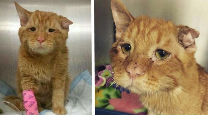 После того как семья не смогла принять этого кота, он впал в депрессию. Его хотели усыпить, когда произошло нечто неожиданное…