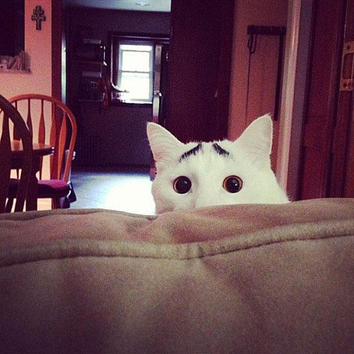 Самые интересные коты