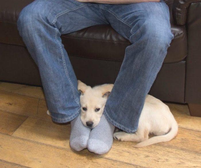 Вот, оказывается, почему собаки любят сидеть на наших ногах. Я даже не знал!