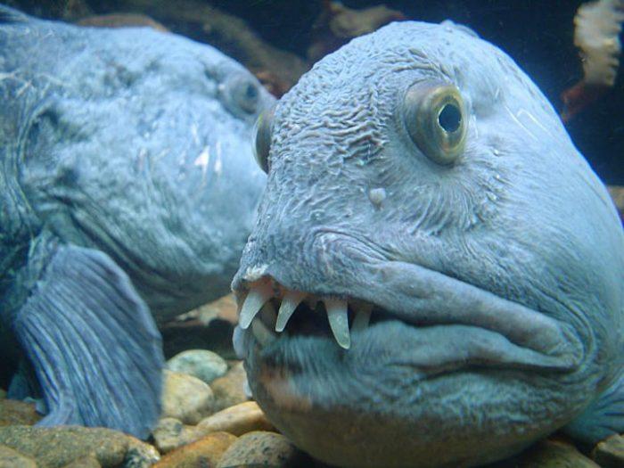 Почему глубоководные рыбы такие страшные