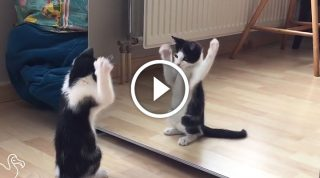Котенок первый раз видит свое отражение в зеркале. Потрясающе!