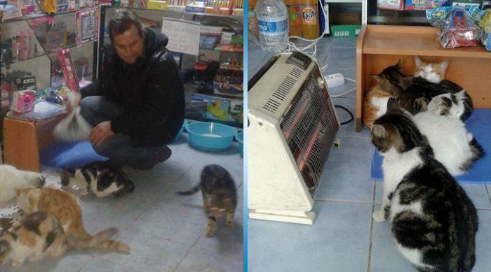 Этот мужчина превратил свой магазин в приют для бездомных кошек во время снежной бури
