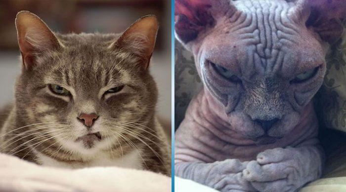 15 самых злых в мире котов, которые не скрывают своих планов завоевать весь мир