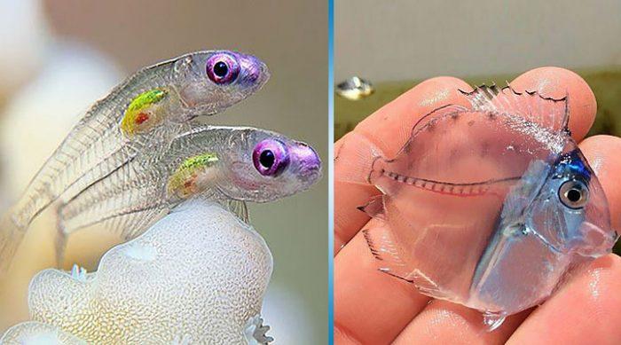 15 прозрачных животных, в существование которых сложно поверить