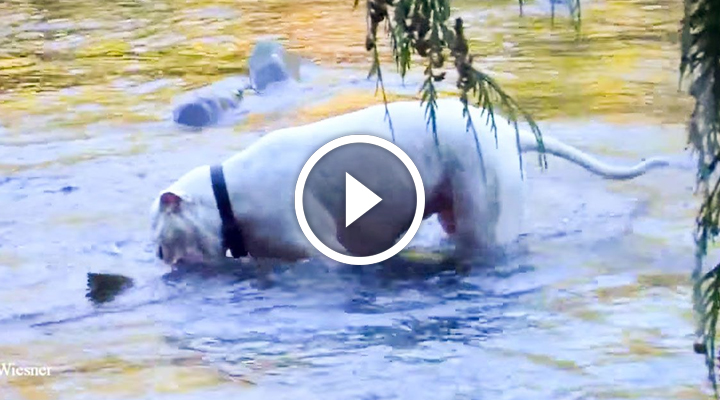 Питбуль весело играл в воде, когда вдруг…