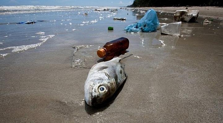Если вы любите рыбу — будьте внимательны: вот какие виды рыб не рекомендуется употреблять в пищу!