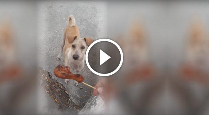 Бездомная собака второй раз подбежала к нему, чтобы попросить поесть. И тогда он решил отправиться за ней…