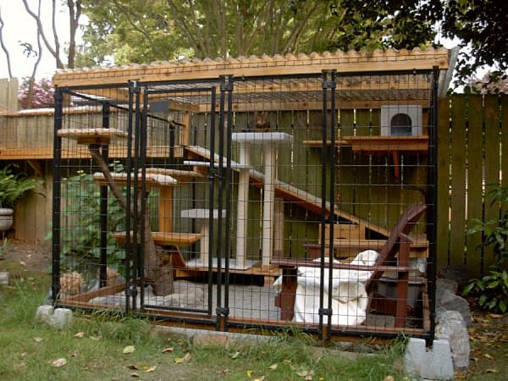 Outdoor cat safety building a cat enclosure