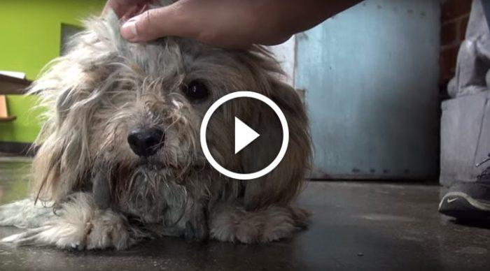 Этого пса нашли грязным, несчастным и голодным. Смотрю и не могу сдержать слезы…
