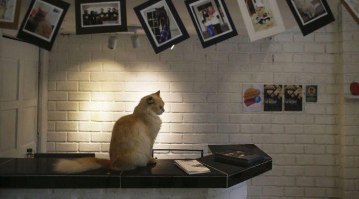 Открыт первый в мире пятизвездочный отель для кошек