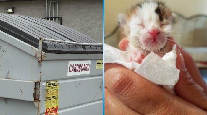 Женщина нашла этого котенка в мусорном баке. Она даже не подозревала, насколько редким он окажется