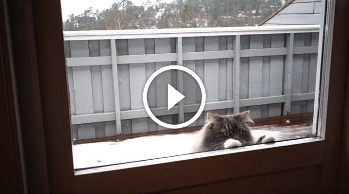 Кошка требовательно постучала в окно. Вот для чего она это сделала…