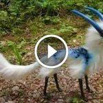 8 животных, в существование которых сложно поверить