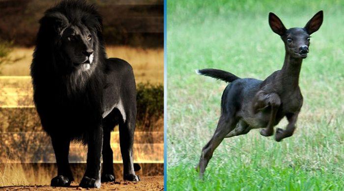 Невероятно, но эти полностью черные животные действительно существуют