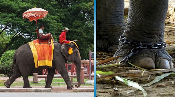 Экскурсия на слоне? Вот какая страшная правда за этим скрывается!
