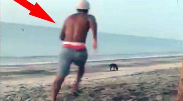 Этот мужчина попытался пнуть бродячую собаку на пляже. То, что произошло дальше, проучило его на всю жизнь!