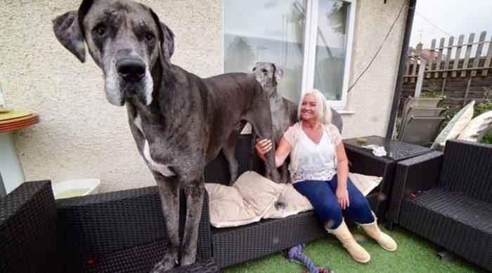 Фредди — официально самая большая собака в мире