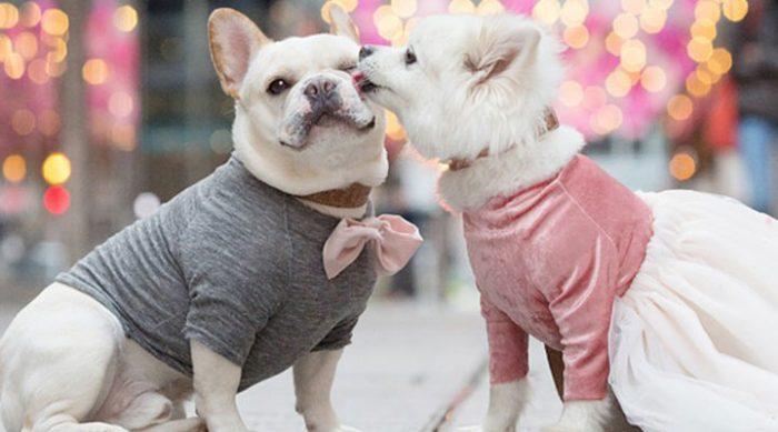 Виновата хозяйка! Что случилось с парой влюбленных собак успел заснять фотограф