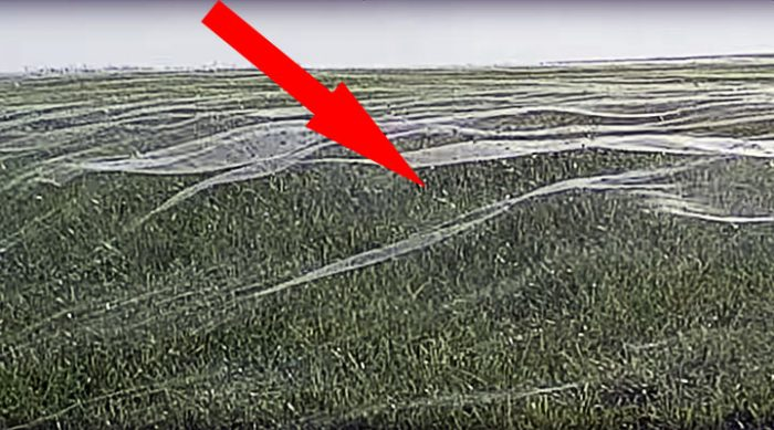 Настоящая жесть! Пауки в Новой Зеландии покрыли целое футбольное поле слоем паутины