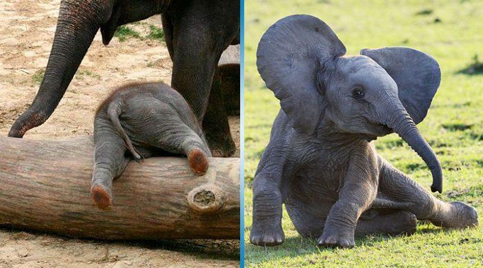 25 самых милых слонят, которые непременно заставят вас улыбнуться!