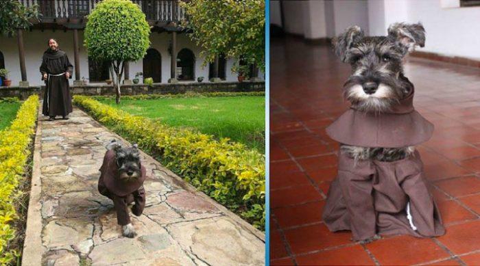 Бездомный пес нашел этот удаленный монастырь, чтобы… стать монахом!