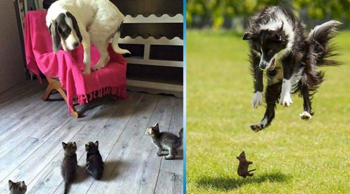 30 фото, доказывающих что даже самые большие и бесстрашные собаки могут бояться маленьких безобидных вещей