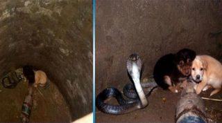 Два щенка случайно упали в колодец, где сидела огромная кобра. Того, что произошло дальше, никто не ожидал!
