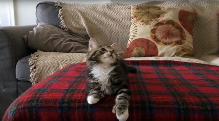 Этот котик с потрясающе подходящей музыкой на фоне стал любимцем всего интернета
