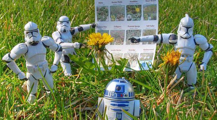 7 эффективных и натуральных способов борьбы с сорняками