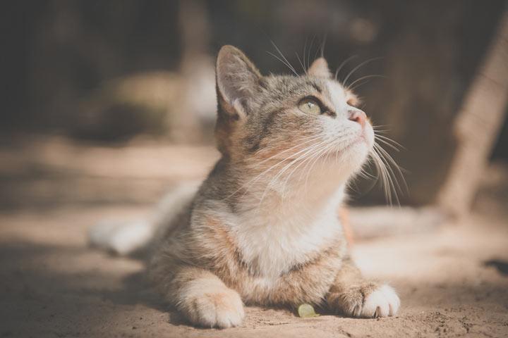house cat outside winter