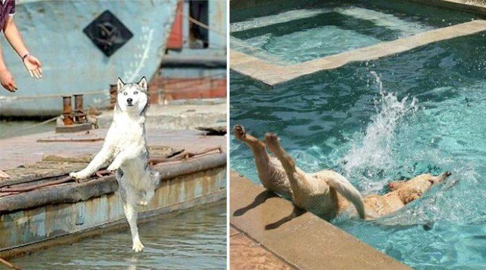 Это самые непосредственные фото собак, сделанные в тот самый момент