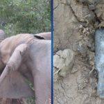 От сильной боли слон бился головой об деревья. Причина его страданий была ужасна!