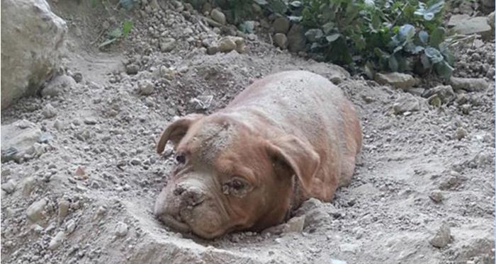 Изверг закопал эту собаку живьем. То, что случилось потом, просто разрывает  сердце!