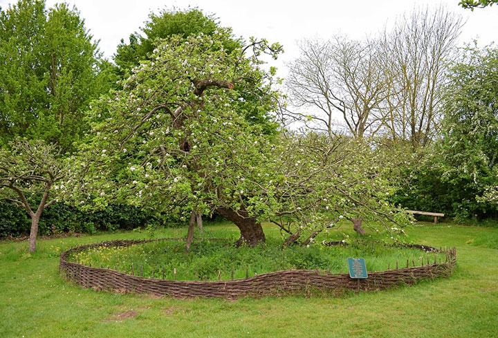дерево Ньютона
