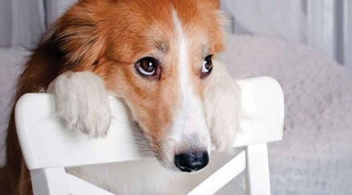 Дважды подумайте перед тем, как наказать собаку. Вот что означает этот «виноватый» взгляд…