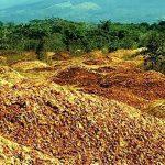 Они разбросали по земле тысячи тонн шкурок от апельсинов. То, что произошло через 16 лет, удивило всех!