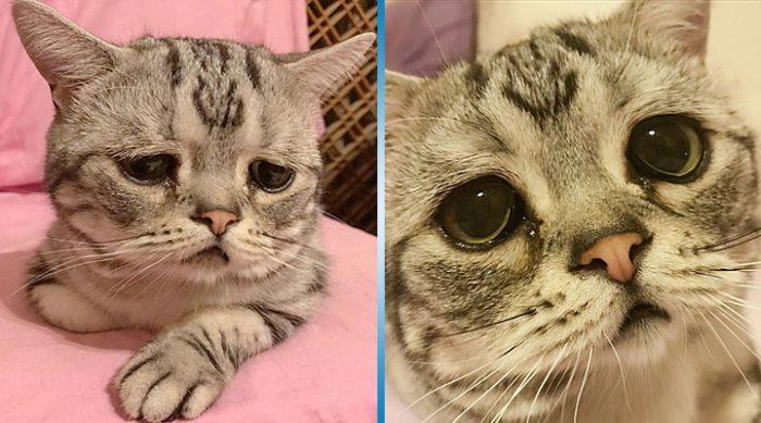 Глаза самой грустной в мире кошки растопят ваше сердце