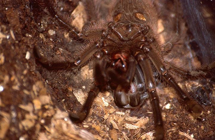 картинка большой паук в мире там