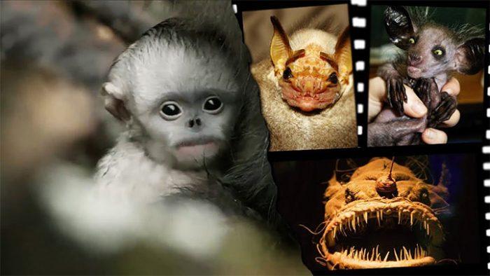 7 реальных животных, которые могли бы сниматься в фильмах ужасов