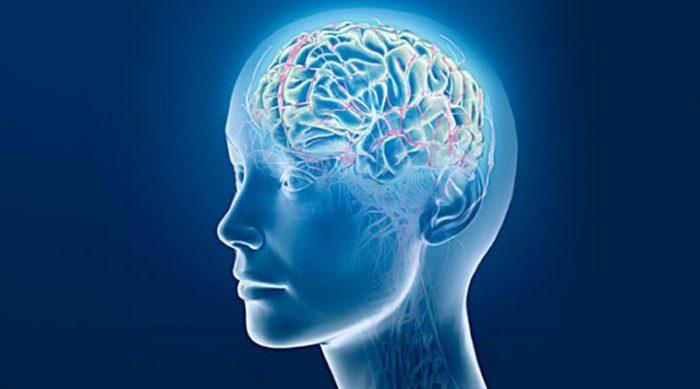 10 фактов о человеческом мозге, которых вы не знали
