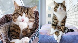 Рекси – самая эмоциональная кошка в мире, которая завоевала интернет
