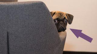 Тайна, которую знают только собаки: как наши четвероногие друзья нами манипулируют