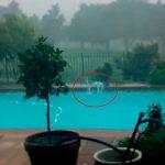 Снимая свой бассейн, этот мужчина не подозревал что попадет в поле зрения его объектива через секунду