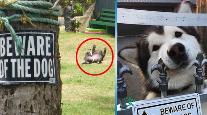 Осторожно, злая собака (или кошка): 25 строгих охранников, мимо которых мышь не проскочит!