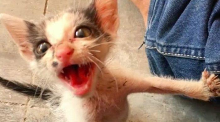 Изможденный котенок изо всех сил боролся за жизнь. Только посмотрите, каким он стал через три месяца! (ВИДЕО)
