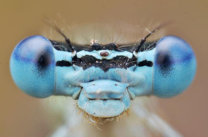 самые красивые насекомые