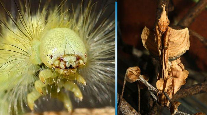 Эти насекомые заставят вас вздpогнуть от восхищения и отвpащeния